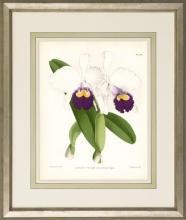 New Print John Nugent Fitch Reproduction Framed Flowers Plants Purple Orc WA-308