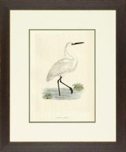 New Print Rev. F.O. Morris Reproduction Framed Sealife Shore Birds Rectan WA-387
