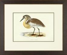 New Print Rev. F.O. Morris Reproduction Framed Sealife Shore Birds Rectan WA-384