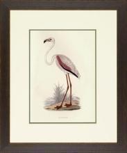 New Print Rev. F.O. Morris Reproduction Framed Sealife Shore Birds Rectan WA-388