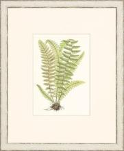 New Print Anonymous Reproduction Framed Flowers Plants Classic Ferns Recta WA-46