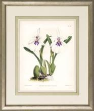 New Print John Nugent Fitch Reproduction Framed Flowers Plants Purple Orc WA-312