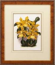 New Print Lucien Linden Reproduction Framed Flowers Plants Lindenia Orchi WA-338