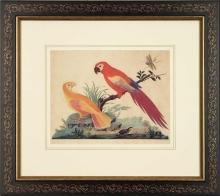 New Artwork Vittorio Ranier Reproduction Framed Wildlife Chinoiserie Bird WA-430