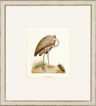 New Print John Abbot Reproduction Framed Wildlife Small Abbot Birds Recta WA-301