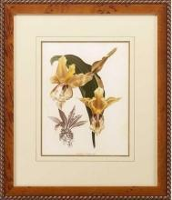 New Print Lucien Linden Reproduction Framed Flowers Plants Lindenia Orchi WA-325