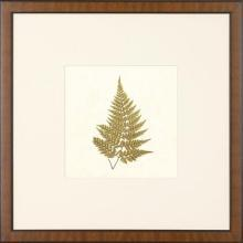 New Print Anonymous Reproduction Framed Flowers Plants Squared Ferns Recta WA-23