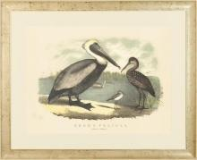 Large New Fine Art Giclee Print Brown Pelicans, Antique White Frame, Litho Repro