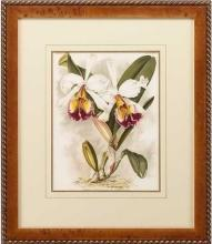 New Print Lucien Linden Reproduction Framed Flowers Plants Lindenia Orchi WA-334