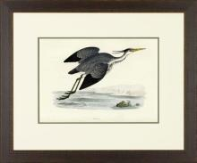 New Print Rev. F.O. Morris Reproduction Framed Sealife Shore Birds Rectan WA-381