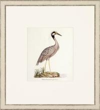 New Print John Abbot Reproduction Framed Wildlife Small Abbot Birds Recta WA-299