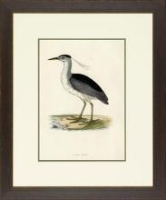 New Print Rev. F.O. Morris Reproduction Framed Sealife Shore Birds Rectan WA-386
