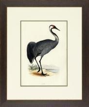 New Print Rev. F.O. Morris Reproduction Framed Sealife Shore Birds Rectan WA-385