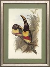 New Print J. Gould H.C. Richeter Reproduction Framed Wildlife Toucans Rec WA-268