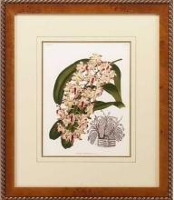 New Print Lucien Linden Reproduction Framed Flowers Plants Lindenia Orchi WA-335