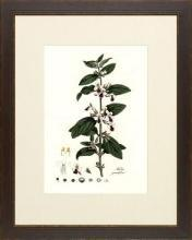 New Print Anonymous Reproduction Framed Flowers Plants Curtis Botanicals R WA-59