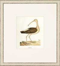 New Print John Abbot Reproduction Framed Wildlife Small Abbot Birds Recta WA-302