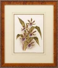 New Print Lucien Linden Reproduction Framed Flowers Plants Lindenia Orchi WA-328
