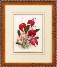 New Print Lucien Linden Reproduction Framed Flowers Plants Lindenia Orchi WA-337