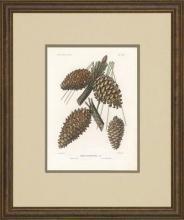 New Print Picart Reproduction Framed Flowers Plants Sylva on North Americ WA-377