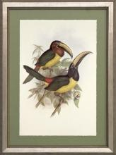 New Print J. Gould H.C. Richeter Reproduction Framed Wildlife Toucans Rec WA-267