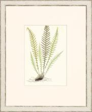 New Print Anonymous Reproduction Framed Flowers Plants Classic Ferns Recta WA-50
