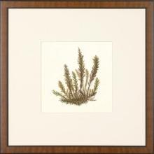 New Print Anonymous Reproduction Framed Flowers Plants Squared Ferns Recta WA-22