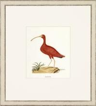 New Print John Abbot Reproduction Framed Wildlife Small Abbot Birds Recta WA-306