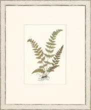 New Print Anonymous Reproduction Framed Flowers Plants Classic Ferns Recta WA-52