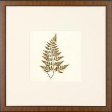 New Print Anonymous Reproduction Framed Flowers Plants Squared Ferns Recta WA-29