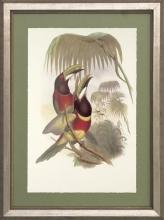 New Print J. Gould H.C. Richeter Reproduction Framed Wildlife Toucans Rec WA-269