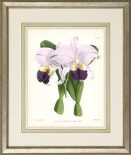 New Print John Nugent Fitch Reproduction Framed Flowers Plants Purple Orc WA-311