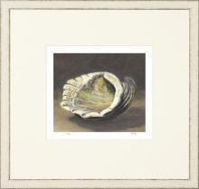 New Print Mark Fetty Reproduction Framed Shells Small Shell Study Rectang WA-350