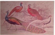 Tapestry TAPESTRIES LTD Peacocks 48x31 4x31 New TL-2583