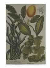 Tapestry TAPESTRIES LTD 38x28 28x38 Linen/Cotton Blend Linen New On-Fram TL-2460