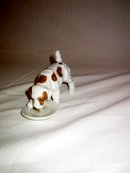 Fox Terrier in Brown color eating in his plate