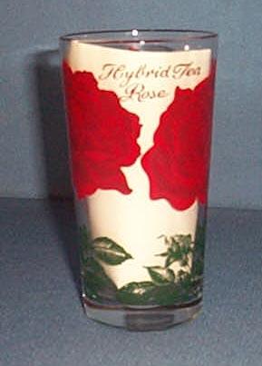Hybrid Tea Rose glass tumbler
