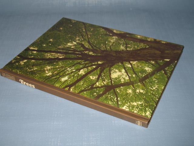Trees by James Underwood Crockett