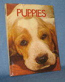 Puppies by Wendy Boorer