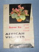 How to Grow and Bloom African Violets at home by J. Lawrence Heinl