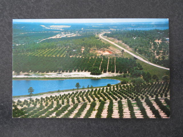 Citrus groves and lakes as seen from the top of the Citrus Tower, FL postcard
