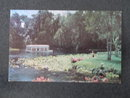 Florida's Silver Springs - Silver River Glass Bottom Boat  postcard