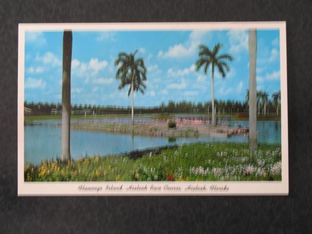 Flamingo Island, Hialeah Race Course, Hialeah, FL  postcard