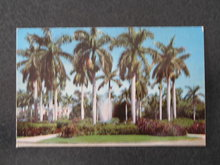 Royal Palms and Fountain Scene in  Sunny Florida postcard