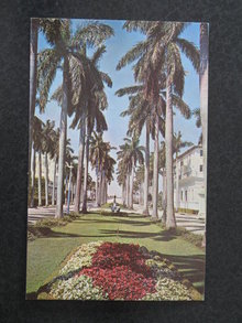 Looking West on Beautiful Royal Palm Way, Palm Beach, Florida postcard