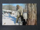 Gathering Maple Syrup,  PA postcard
