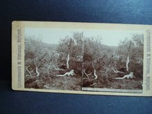 Antique Stereoview  Stereoscopic  Card Iceland