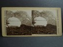 Antique Stereoview Stereoscopic Card Iceland - Nature's Creation