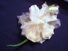 VELVET / ORGANDY ROSE