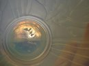 OPALESCENT*SABINO VASE*SEA SHELLS/CORAL
